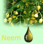 Neem Oil Extraction Process