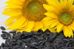 sunflower oil processing