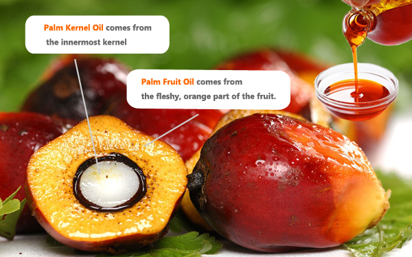 what is palm kernel oil