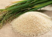 Rice Oil Mill