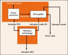 Jatropha Oil Extraction Process
