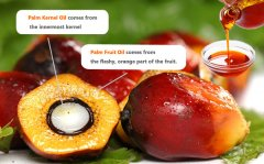 how is palm kernel oil extracted
